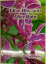 Lilac Blossom After Rain.
