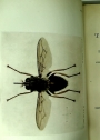 A Handbook of the Tsetse-Flies (Genus Glossina).
